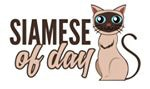 Siamese Of Day