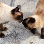 The Do's and Don't s of Introducing Cats