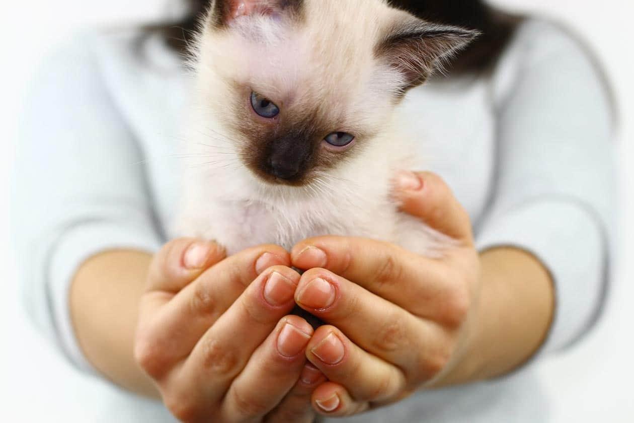bond with siamese cat