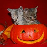 Top Cat Halloween Costumes for 2019