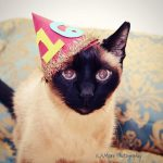 Kitten Birthday Party Ideas