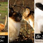 Do Siamese Cats Need A Companion?