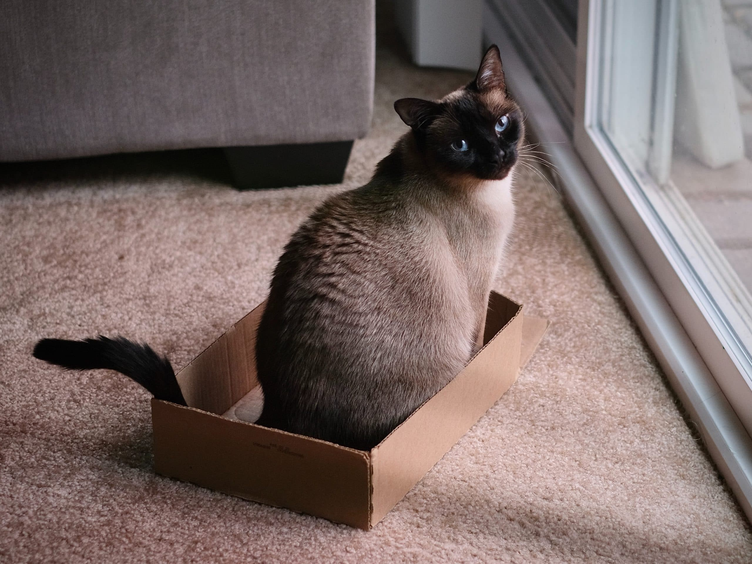 Siamese Cat Travel Accessories
