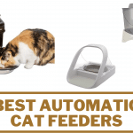 6 Best Automatic Cat Feeders (Review) in 2020