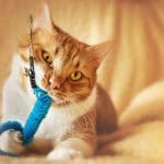 Best Cat Chew Toys: Chewing Toys for Kittens & Cats