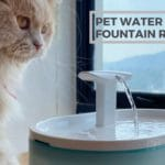 Petlibro Automatic Pet Water Fountain Review