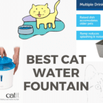 5 Best Cat Water Fountain (We Tested Them All)