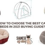 Best Cat Beds: Tips to Choose Cat Bed & (Reviews & Buyer's Guide) 2021