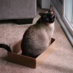 Cat Pregnancy: Basic Info You Need to Know!