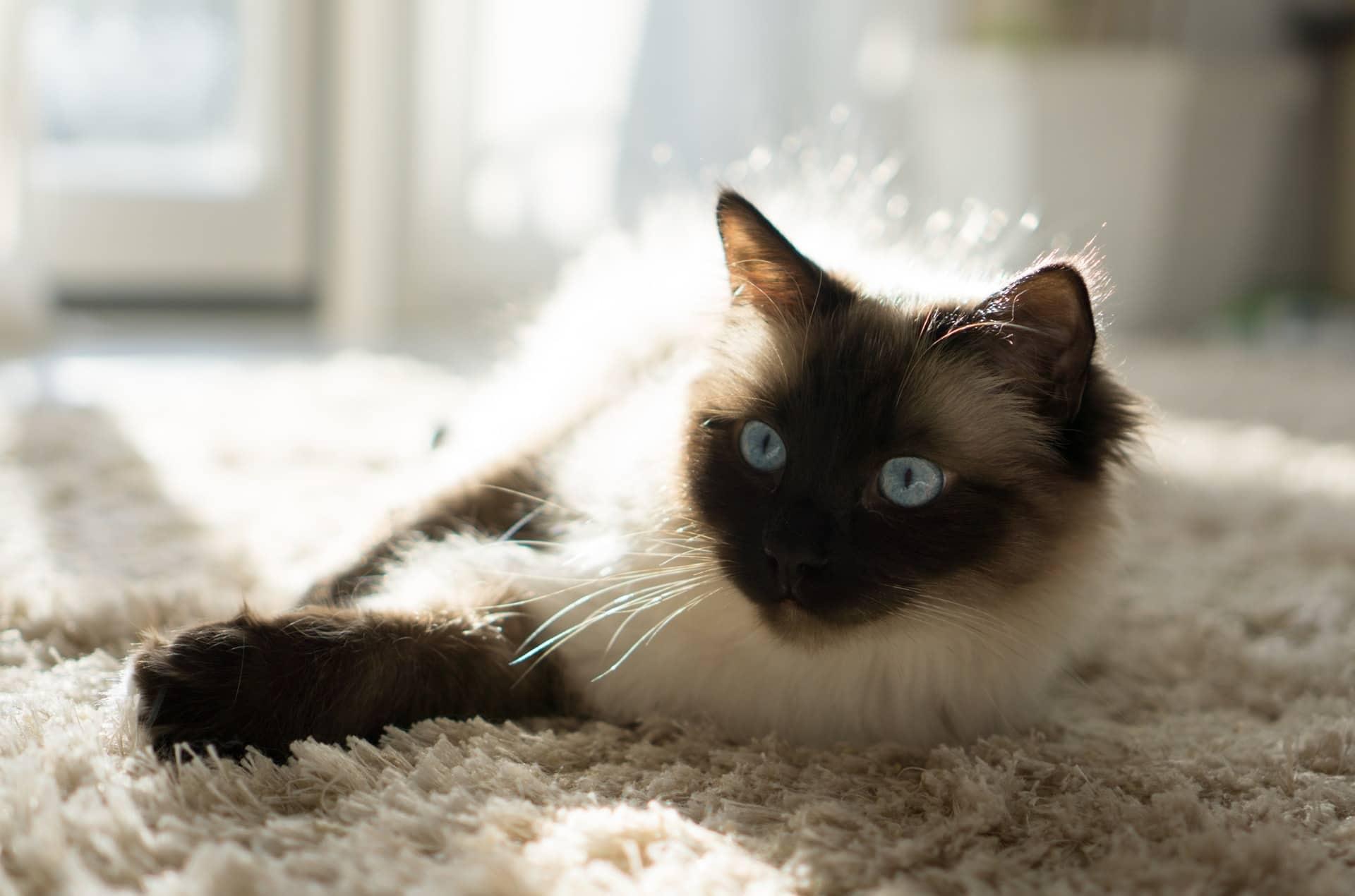Apartments Cat