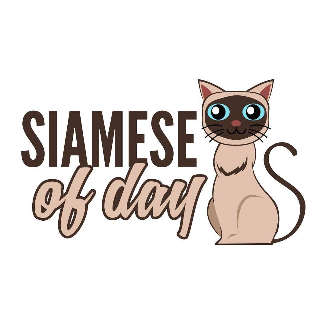 siameseofday